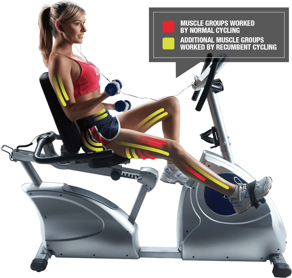 muscles worked on by recumbent bikes